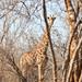 SouthAfrica2014-3706.jpg