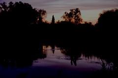 violet sky | Violetter Himmel