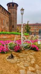 Torino, piazza Castello, bici , gatti e topi.