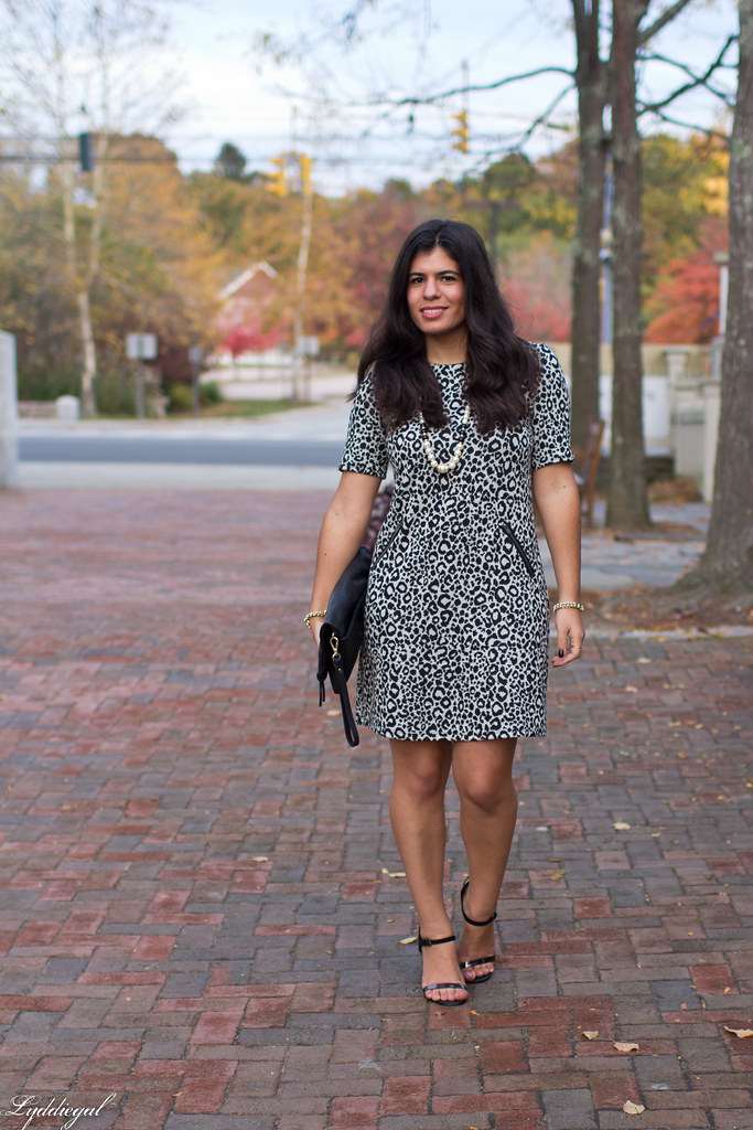 leopard dress, black clutch, black heels.jpg