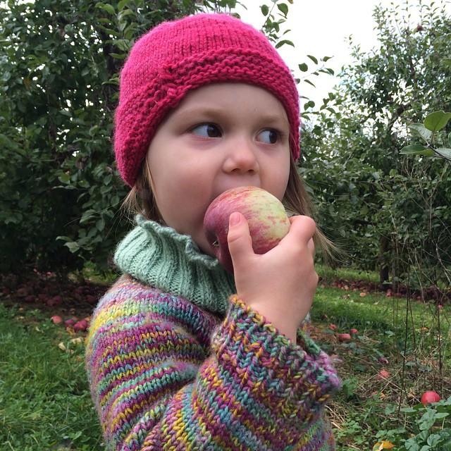 Sampling the goods during the MSR apple-picking trip!