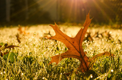 park morning autumn sun fall grass sunshine yard leaf fineart ground dew morningdew morningsun fineartphotography walldecor walldecoration fallseason brownleaf canvasprints autumnseason photosoncanvas delawarephotographer printsoncanvas photographicfineart