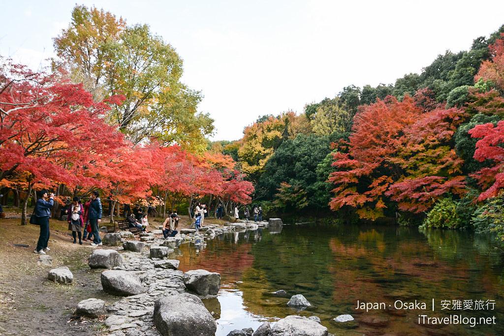 大阪赏枫 万博纪念公园 红叶庭园 12