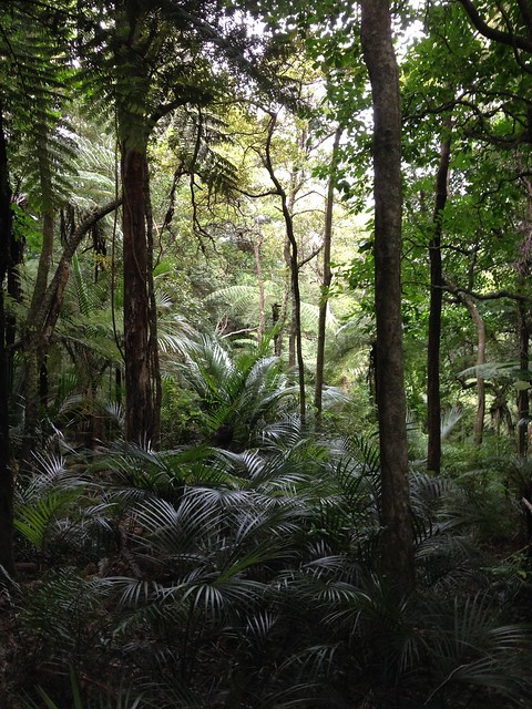 Tangihua Forest, outside of Whangarei