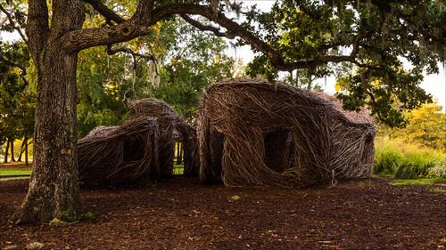 park sculpture tree art texas unitedstates tx houston spanishmoss hermannpark hermann dougherty sapling saplings boogiewoogie artinthepark patrickdougherty chinesetallow hermannparkconservancy glyphmaze