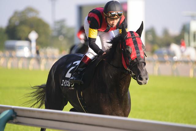 Eishin Hikari, on the Track