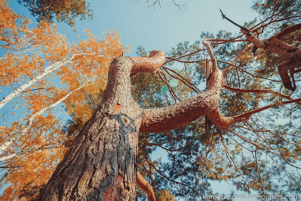 Autumn-022