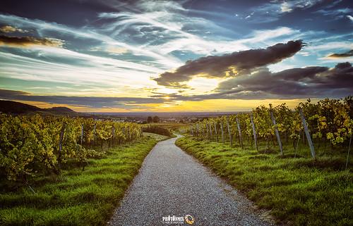 road sky clouds landscape deutschland nikon nopeople vineyards contrails hdr chemtrails d800 badenwuerttemberg kraichgau photonmix