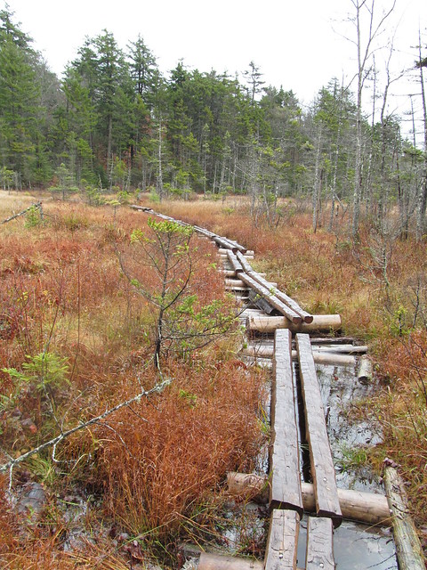 Bog bridging
