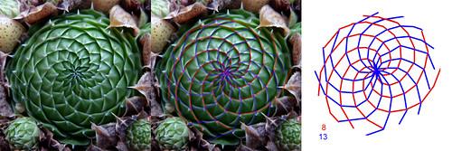 La géométrie dans le monde végétal 15413747537_cfb4e4a796