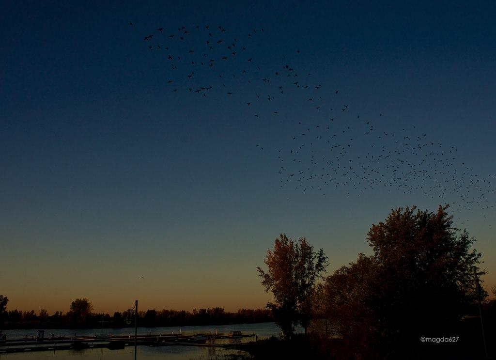 anteketborka.blogspot.com,  birds 4