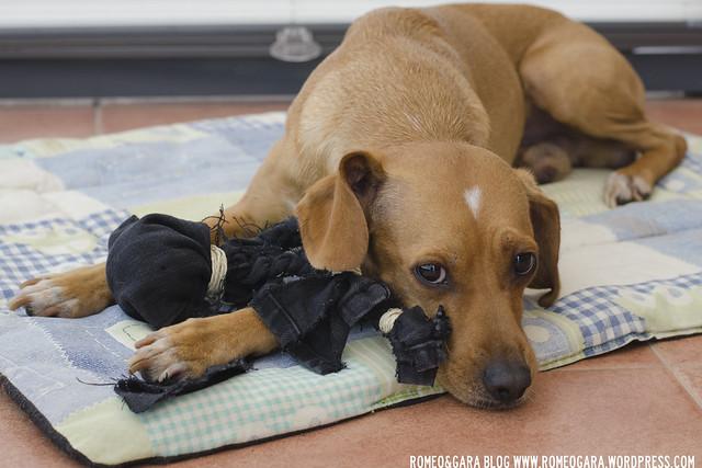 DIY Juguete para perros: pulpo