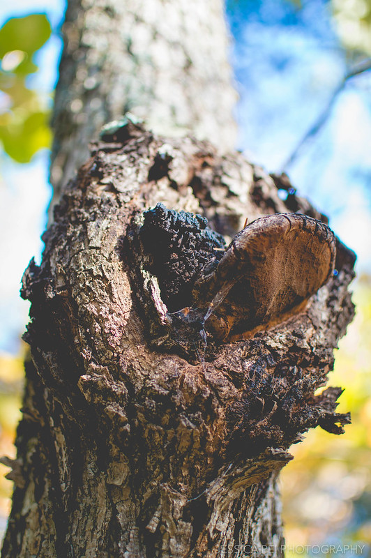 tree stub nature hike