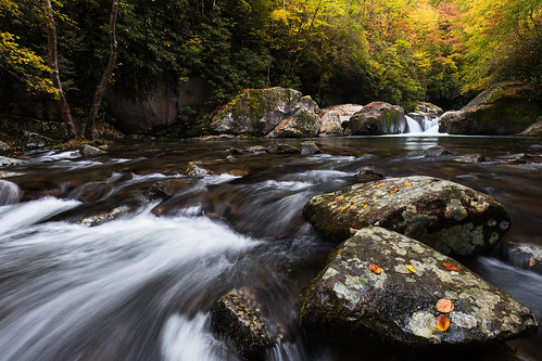 autumn color fall nature water leaves creek outdoors stream scenic northcarolina bigcreek appalachians greatsmokymountainsnationalpark westernnorthcarolina bigcreektrail southernappalachians midnightholefalls greatsmokymountainsnationalparkphotography