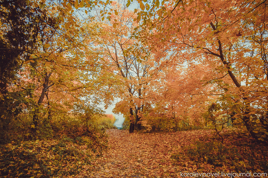 Autumn-244