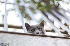 Mirando desde arriba.