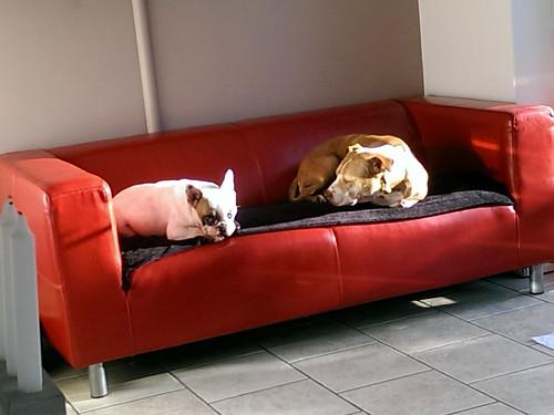 Coco & Mizz