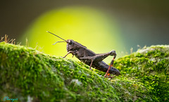 Insects . animals 昆蟲 . 動物 2015~