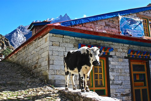 A scenic cow watches over the monastery