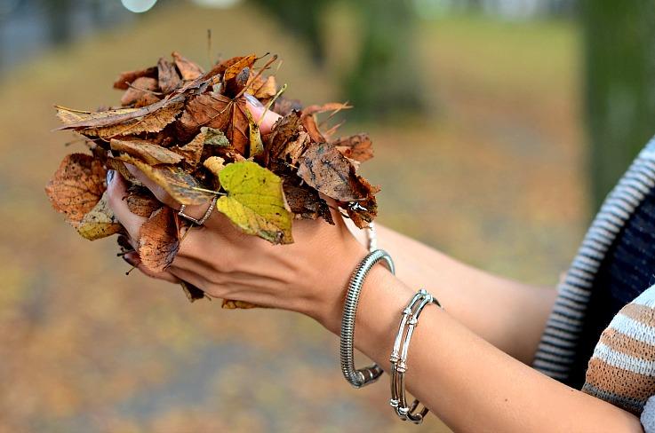 DSC_1293 Fall leafs