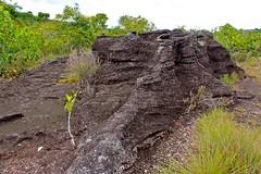 Roca y selva