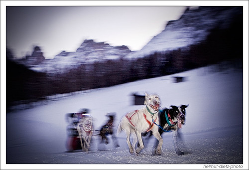 Alpentrail Sled Dog Photo: Action & Night - a matter of luck ...
