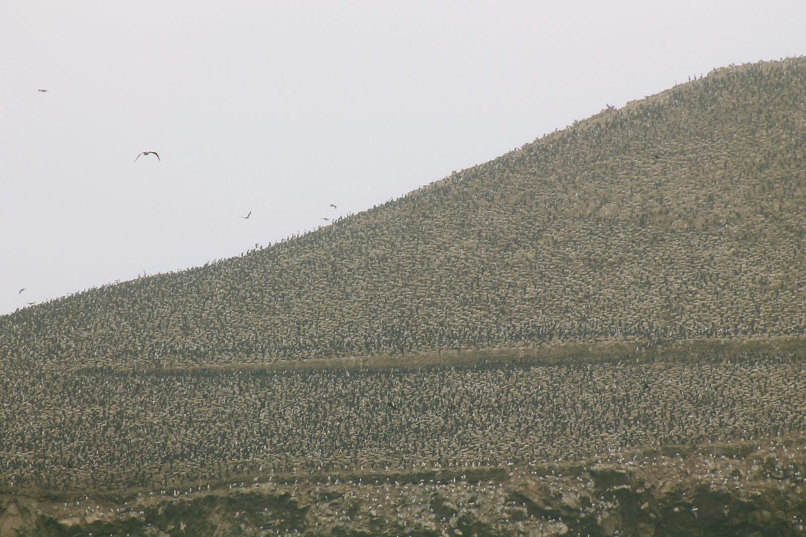 PinguinsMountain