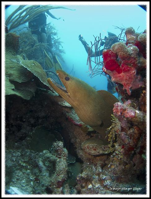 Buceando en Utila, Paradise Divers