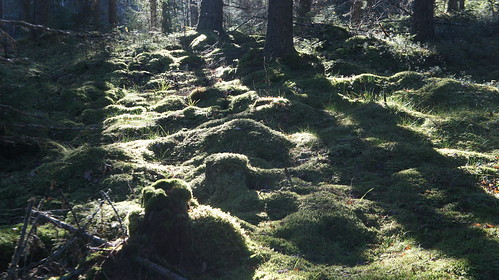 forest suomi finland sony snapshot sunny trail virrat metsä aurinkoinen luontopolku nex3 näpsy