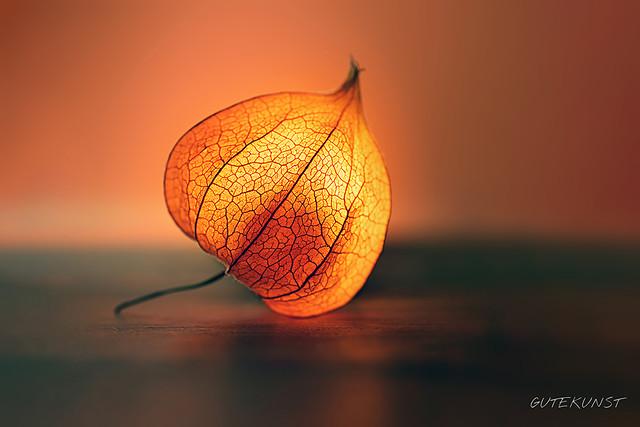 Mi, 2014-10-22 11:27 - Der Herbst ist da! Ein Grund mehr diesen Physalis-Lampion zum leuchten zu bringen! Kein Photoshop. Hilfsmittel: Taschenlampe + Blitz.