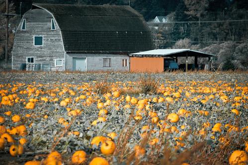 10-21-14 Pumpkins