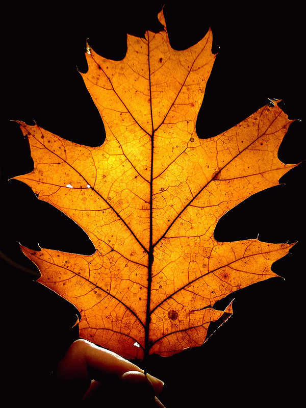 glowing-leaf-2
