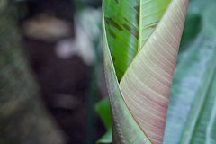 Folding leaf