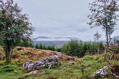 West Highland Way - Crainlarich to Tyndrum