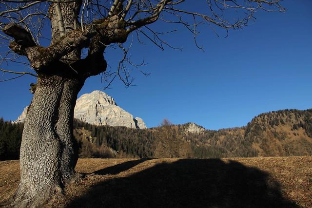 L'albero, l'ombra e la montagna