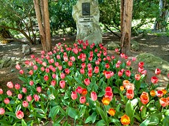 Monuments and tulips