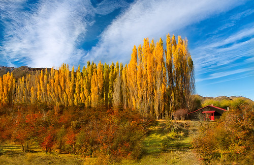 chile autumn cloud patagonia sunlight tree fall nature landscape photography cottage bluesky valley change scenics tranquilscene aspentree traveldestinations lushfoliage chacabucovalley