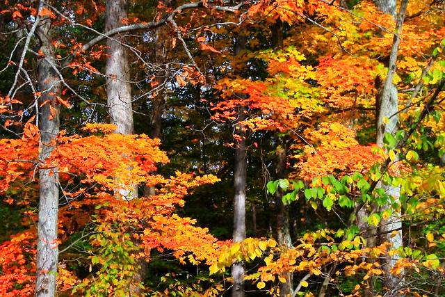 Fall Colors at Patoka