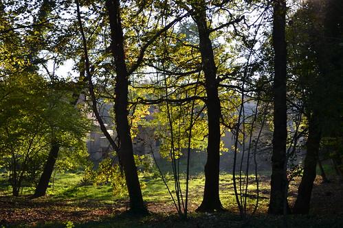 Herbst 2014 an der Saale in Halle