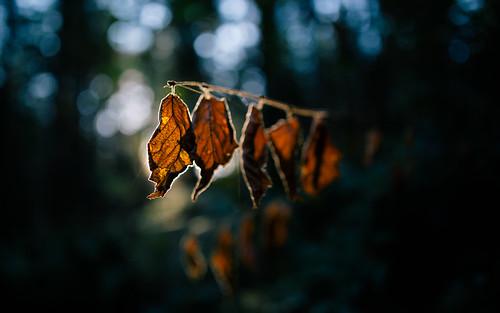autumn fall nature dof seasons bokeh depthoffield pacificnorthwest washingtonstate canoneos5dmarkiii sigma35mmf14dghsmart johnwestrock blackdiamondnaturalarea