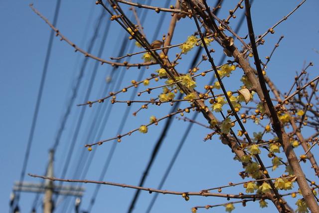 2014-02-01_00024_宝登山