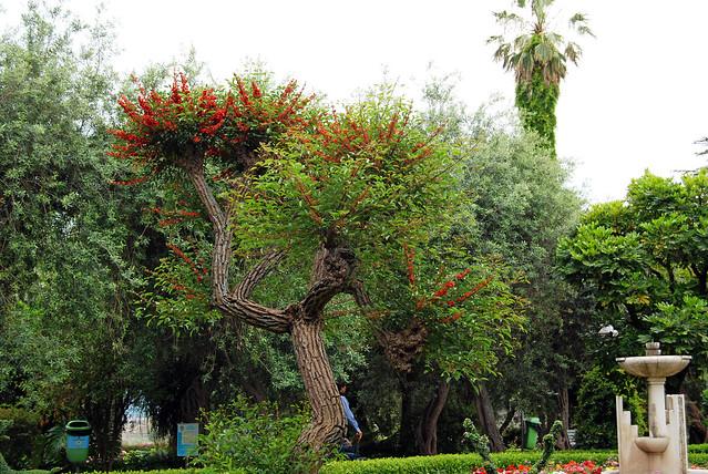 Taormina_2014 06 02_1117