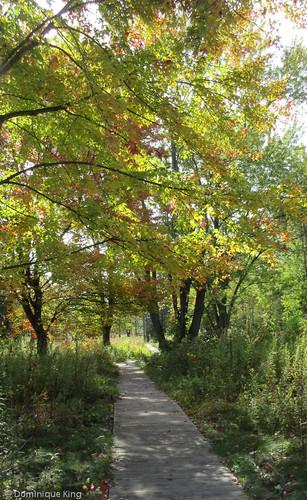 Irwin Prairie State Nature Preserve, Toledo, Ohio