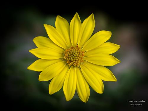 sonniges gelb