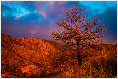 1250 2014 35350mm 45 63mm 7d 7dmark1 bokeh burntpine burnttree canon classic colorado coloradosprings ef35350mmf3556lusm eos7d explore explored foothills gleneyrie morningsunlight mountainshadows nature northamerica pinetree rockymountains sunrise superzoom telephoto unitedstates usa infinitexposure best wonderful perfect fabulous great photo pic picture image photograph
