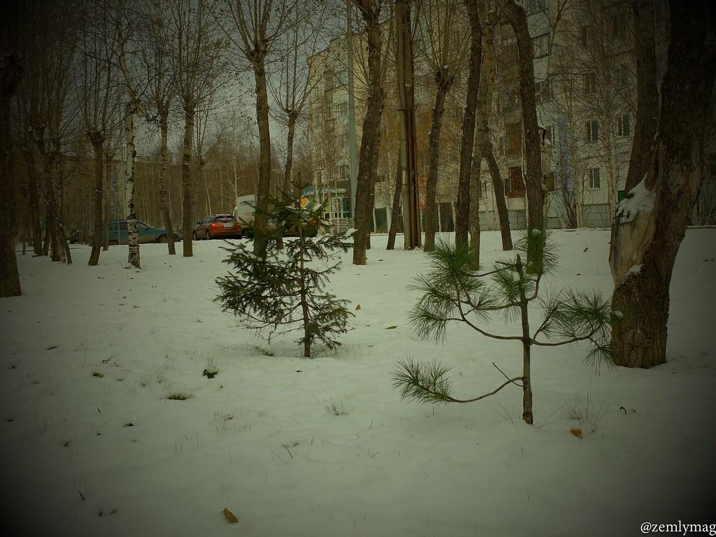 sur_1vkr_zima-10