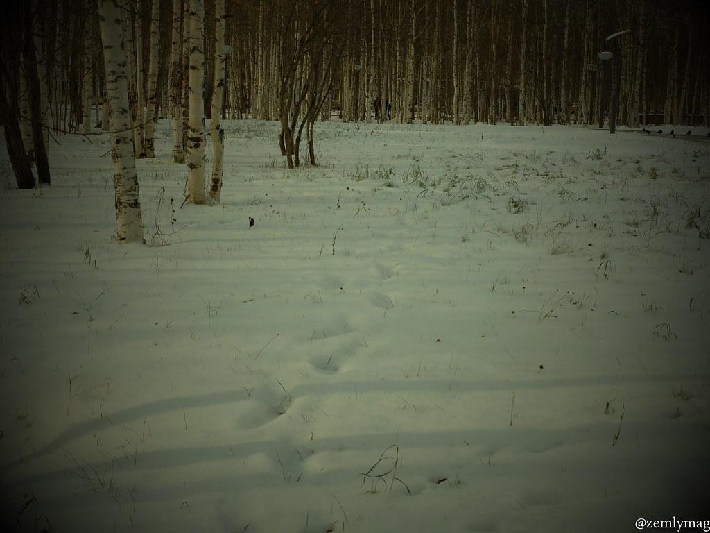 sur_1vkr_zima-19