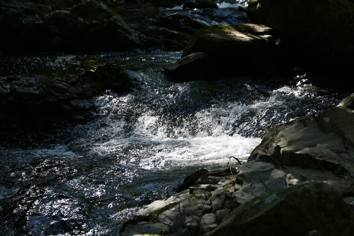 るり渓の木漏れ日