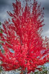 Autumn 268