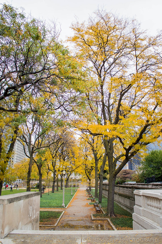Grant Park Fall Autumn Yellow Trees